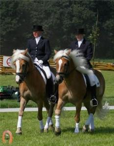 haflingerstaldeflammert.nl-website-20090209-223003-906252
