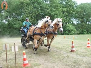 haflingerstaldeflammert.nl-website-20070415-020439-20110530-195239-492318