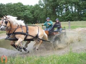 haflingerstaldeflammert.nl-website-20070415-020908-20110530-195440-990778