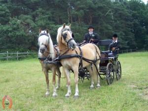 haflingerstaldeflammert.nl-website-20060430-102218-20090209-200816-875003