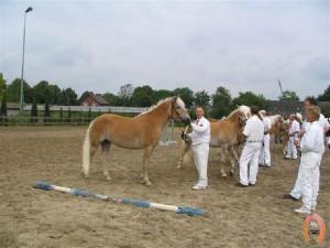 haflingerstaldeflammert.nl-website-20081123-212139-218753