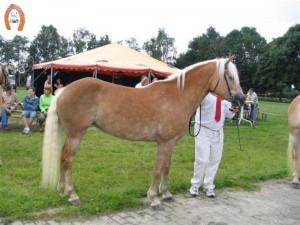 haflingerstaldeflammert.nl-website-20091123-205830-146968