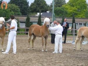 haflingerstaldeflammert.nl-website-20091128-161004-611416
