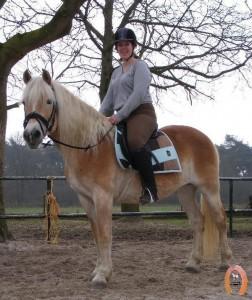haflingerstaldeflammert.nl-website-20090417-214904-671879