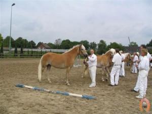 haflingerstaldeflammert.nl-website-20091123-211941-945997