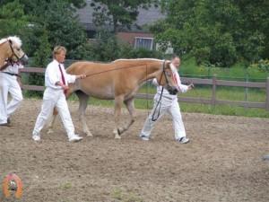 haflingerstaldeflammert.nl-website-20091125-211111-361559