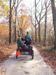 haflingerstaldeflammert.nl-website-20091114-191420-181799