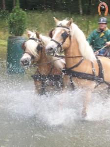 haflingerstaldeflammert.nl-website-20090607-161037-078128