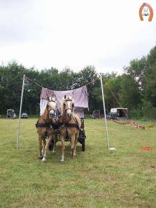 haflingerstaldeflammert.nl-website-20090607-161211-484377