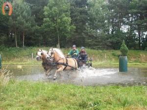 haflingerstaldeflammert.nl-website-20090607-161349-250003