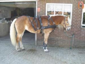 haflingerstaldeflammert.nl-website-20100430-221651-364676