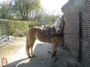 haflingerstaldeflammert.nl-website-20100430-221709-509328