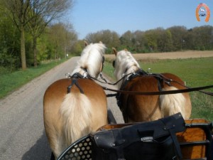 haflingerstaldeflammert.nl-website-20100430-221722-997738