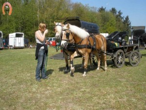 haflingerstaldeflammert.nl-website-20100430-221758-575740