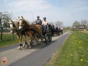 haflingerstaldeflammert.nl-website-20100430-221844-786705