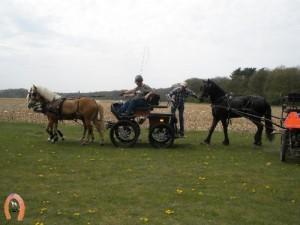 haflingerstaldeflammert.nl-website-20100430-222006-455850