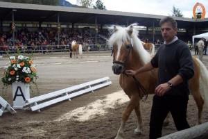 haflingerstaldeflammert.nl-website-20091122-141802-576045