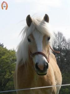 haflingerstaldeflammert.nl-website-20091128-161419-892345