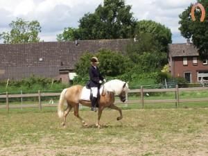 haflingerstaldeflammert.nl-website-20091114-195318-940578