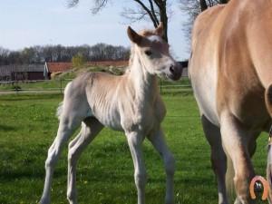 haflingerstaldeflammert.nl-website-20100508-194049-928585