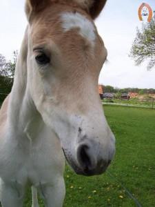 haflingerstaldeflammert.nl-website-20100508-194401-803172