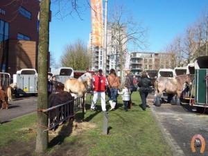 haflingerstaldeflammert.nl-website-20070204-000657-20110319-203928-420875