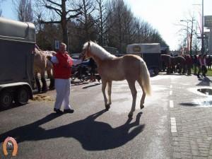 haflingerstaldeflammert.nl-website-20070204-000857-20110319-204026-651531