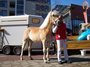 haflingerstaldeflammert.nl-website-20070204-010235-20110319-203813-429728